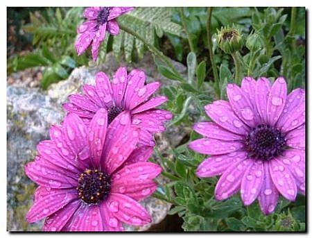 Jardiner a ecol gica jard n natural for Jardineria ecologica